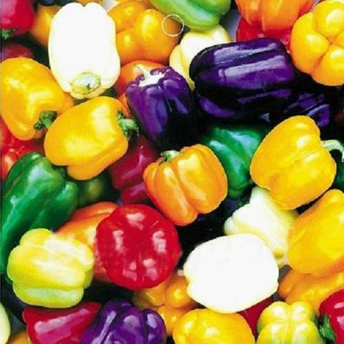 (Multi Colours Sweet Pepper Organic Flavor Vegetable Fruit 20 Seeds)