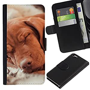 Vizsla Golden Retriever Hund Dog Canine - la tarjeta de Crédito Slots PU Funda de cuero Monedero caso cubierta de piel Apple (4.7 inches!!!) iPhone 6 / 6S