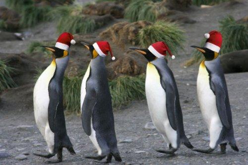 gufi e gabbiani Edition Colibri Set di 12 biglietti natalizi con gatti
