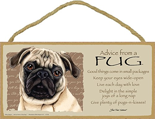 (SJT67558) Advice from a Pug (Brown/tan color) 5