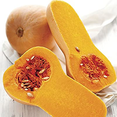 Park Seed Early Butternut Hybrid Winter Squash Seeds