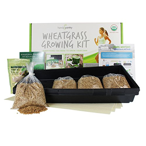 Handy Pantry Wheatgrass Growing Kit - Hydroponic - Organic - Non-GMO - Easy & Fast to Grow Wheat Grass at Home ()