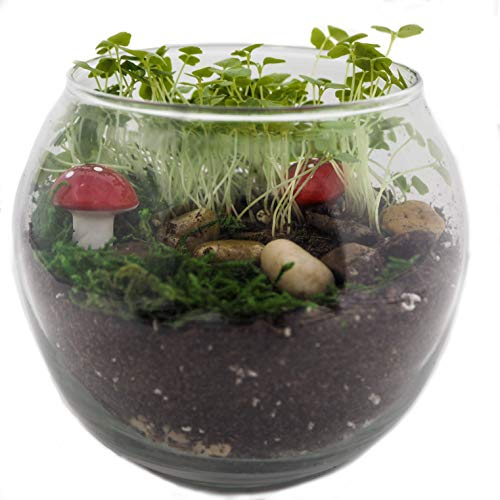 TerraGreen Creations - Easy Grow Complete Fairy Garden kit - Includes All Supplies for Making A Enchanted and Magical Fairy Garden - Great Indoor Garden - Made in USA ()