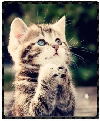 Amazon Com Custom Cute Kitten Kitty Cat Animals Super Soft Warm Fleece Throw Blanket 50 X 60 Medium Home Kitchen