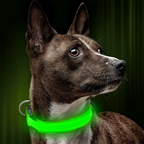 Illumifun LED Dog Collar, USB Rechargeable Nylon Webbing Adjustable Glowing Pet Safety Collar, Reflective Light Up Collars for Your Dogs (Green, X-Small)