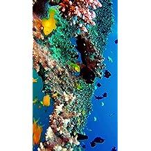Beautiful Coral Reef Fish, Relaxing Ocean Fish, Aquarium Relax Music Vol 4 (German Edition)