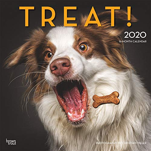 Treat 2020 12 x 12 Inch Monthly Square Wall Calendar by Hachette, Humor Art Photographer Treat Time Animals (English, French and Spanish Edition)