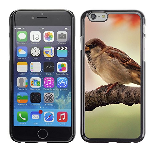 "Premio Sottile Slim Cassa Custodia Case Cover Shell // V00003863 moineau // Apple iPhone 6 6S 6G PLUS 5.5"""