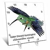 3dRose dc_37142_1 Cuban Emerald Hummingbird Desk Clock, 6 by 6″