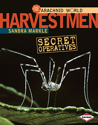 Harvestmen: Secret Operatives (Arachnid World) (Life Cycle Of A Daddy Long Legs)