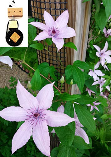 "Scroll Trellis Garden Trellis Kit, 9' tall by 4"" Wide for Narrow Spaces, Fence Posts, Downspouts, Customizable for Wall and Larger Spaces Grow Climbing Plants Clematis, Morning Glory, More (1,Trellis)"