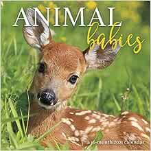 2021 Animal Babies Wall Calendar Trends International 0057668211613 Amazon Com Books