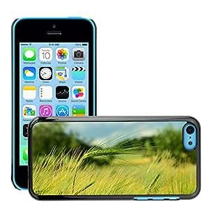 Print Motif Coque de protection Case Cover // M00237042 Cereales Cebada Punto de la cebada // Apple iPhone 5C