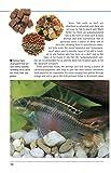 Freshwater Aquariums: Basic Aquarium Setup and