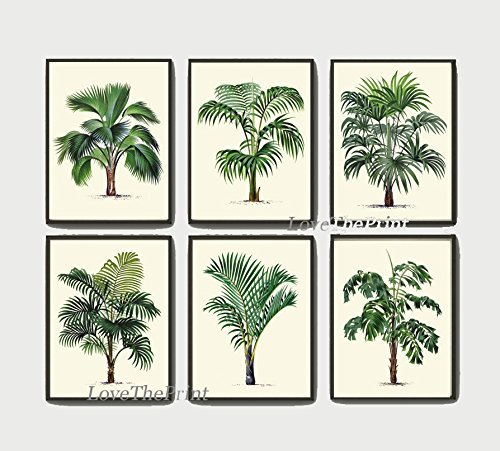 Vi Framed Print Set (Palm Tree Print Set of 6 Antique Art Beautiful Green Plants Tropical Garden Nature Home Room Wall Decor Unframed LPH)