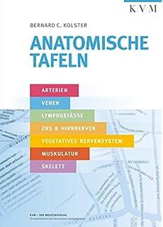 Leitungsbahnen: Arterien, Venen, Lymphbahnen und Nerven schematisch ...