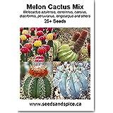 Melon Cactus Mix (Melocactus) 25+ Seeds