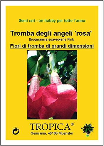 Brugmansia suaveolens Pink - 12 semi tromba degli angeli rosa TROPICA