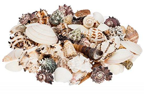NaDeco® Muschelmix large 1kg | Bastelmuscheln | Deko Muschel | Deko Schnecken | maritime Dekoration