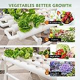 VIVOSUN Hydroponic Grow Kit, 1 Layer 36 Plant Sites