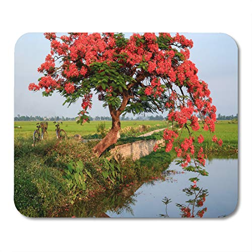 Semtomn Mouse Pad Poinciana Phoenix is Flowering Plant Species Live in The Mousepad 9.8