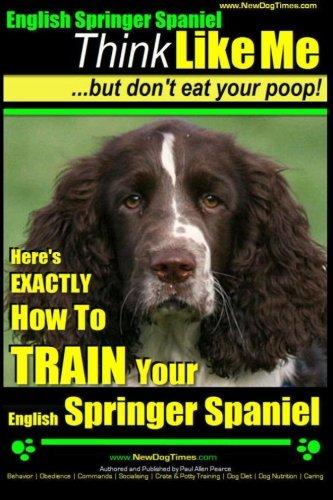 English Springer Spaniel Puppies - 8