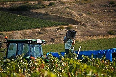 Orube Tinto Crianza - Vino Tinto Rioja - 750 ml