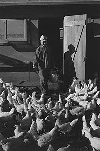 (Buyenlarge Chicken Farm, Mori Nakashima - Gallery Wrapped 44