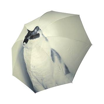 Paraguas de lluvia personalizable único para gatos hipster plegable, sombrilla o paraguas: Amazon.es: Deportes y aire libre