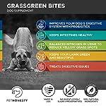 PetHonesty GrassGreen Grass Burn Spot Chews for Dogs - Dog Pee Lawn Spot Saver Treatment Caused by Dog Urine - Cranberry, Apple Cider Vinegar, DL-Methionine Grass Treatment Rocks - 90 Chew Treats 13