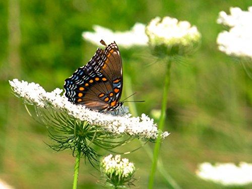 - Butterfly On Flower
