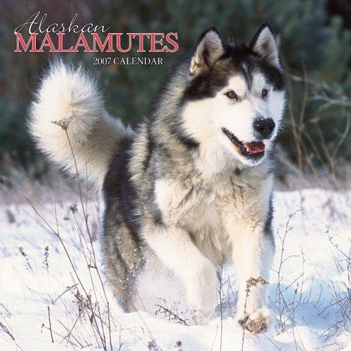 Alaskan Malamutes Calendar 2007
