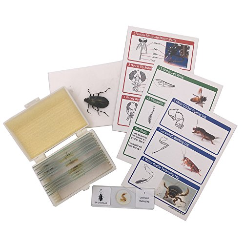 red Insect Bug Parts Microscope Slides Set + Real Beetle Specimen + Postcards STEM Science Kit (Microscope Slide Kits)