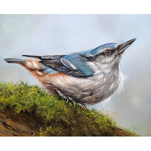 Beautiful Bird Diamond Painting