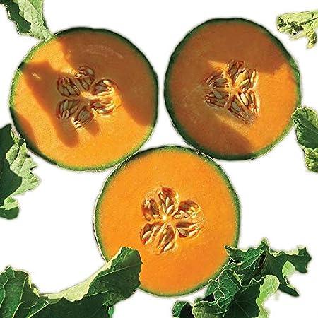 Amazon Com Park Seed Lilliput Hybrid Cantaloupe Seeds Garden Outdoor Jiashi cantaloupe seed 10 seeds cucumis melo saccharinus crispy juicy fruit b107. amazon com