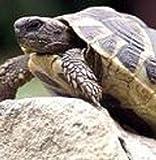 Wildflower - Tortoise Food Mix - 5g