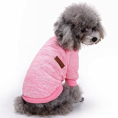 dog sweaters for small dogs girl buyer's guide for 2019