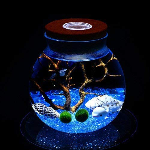 LED Aquarium Marimo Kit - Globe Glass Jar with 2 Aquatic Moss Ball Blue Glass Pebbles Fan Coral Branch and Seashells Office Desk Decor Table Centerpiece Unique Birthday Presents