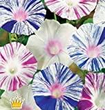 "Flower seeds Bindweed ""Morning-glory Harlequin"" (Ipomoea Purpurea) Arlekin MIX."
