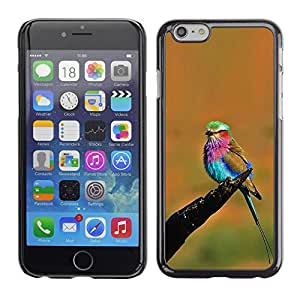 Plastic Shell Protective Case Cover    Apple iPhone 6    Colorful Bird Summer @XPTECH