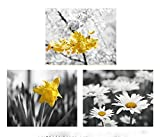 Bathroom Decor, Modern Bathroom Art, Grey and Yellow Photographic Print set of 3 Photos 8x10, 11x14, 5x7, Cottage Bathroom Set, Laundry Room Decor - 20% off discount