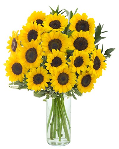 Apollo Sunflower Bouquet: 15 Sunflowers and Lush Greens with Vase - by KaBloom