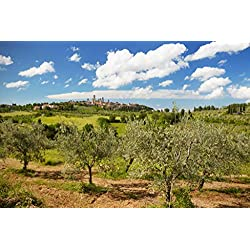 Olive Trees in front of San Gimignano Province of Siena Tuscany Italy Photo Art Print Poster 18x12