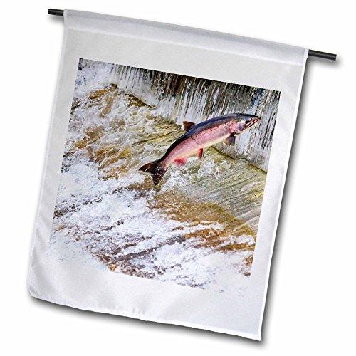 3dRose Danita Delimont - fish - Salmon jumping up a fish ladder. Issaquah Hatchery, Washington - 18 x 27 inch Garden Flag (fl_260549_2)