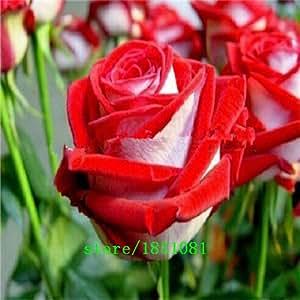Gran venta 100 semillas de Rose 9 paquetes de cada color 100 semillas -DIY cultivar un huerto casero Pot Balcón y patio fragante flor de la planta de Bonsai Decorat