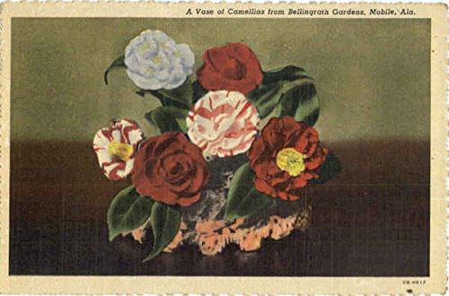A Vase of Camellias from Bellingrath Gardens Flowers Original Vintage Postcard ()