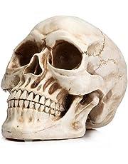 Readaeer Life Size Human Skull Model 1:1 Replica Realistic Human Adult Skull Head Bone Model