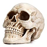 Readaeer Life Size Replica Realistic Human Skull Head Bone Model (Small Image)