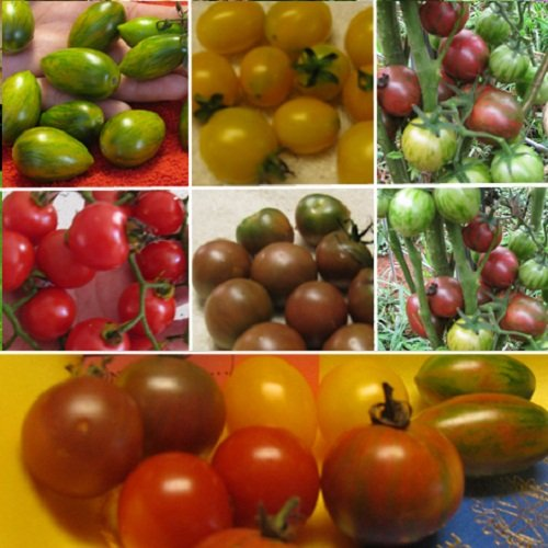(125 Seeds of Heirloom Cherry Tomato Collection - Green Tiger Cherry, Black Cherry, Black Zebra Cherry, Yellow Tommy Toes and Red Tommy)