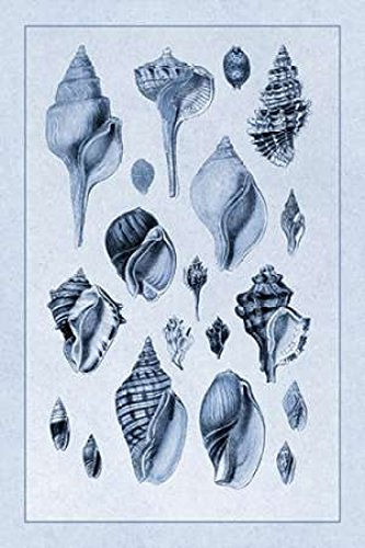 (Shells Sessile Cirripedes #3 (Blue) Poster Print by GB Sowerby (12 x 18))